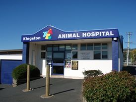 Vet Clinic in Kingston